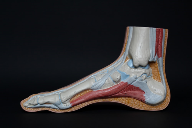 6 Common Foot and Ankle Problems
